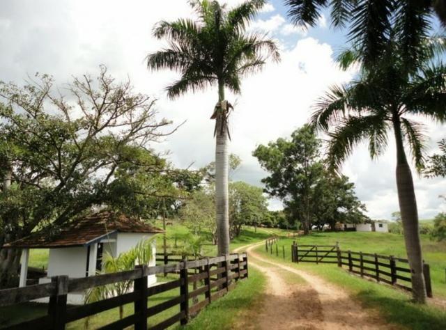 Fazenda 700 Alqueires - Região de Presidente Prudente-SP - Foto 12