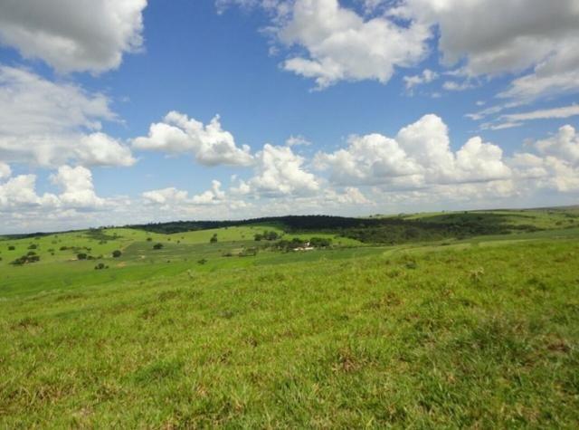 Fazenda 700 Alqueires - Região de Presidente Prudente-SP - Foto 9
