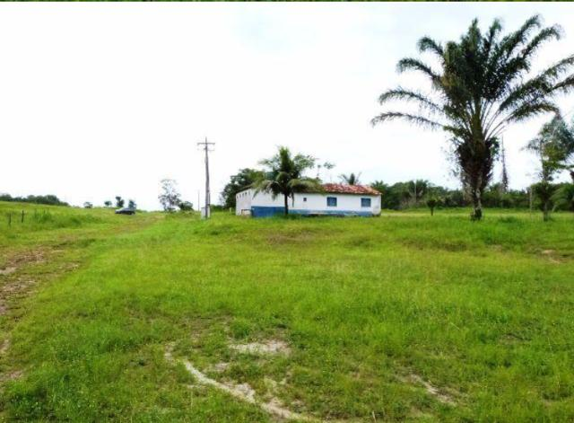 Fazenda na Estrada da Vigia - PA (2 KM de frente - Beira da pista)