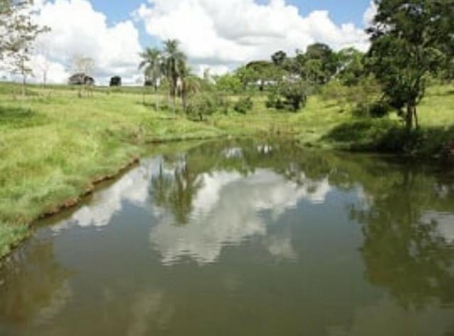 Fazenda 700 Alqueires - Região de Presidente Prudente-SP - Foto 10
