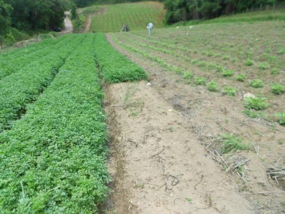Terreno em Piedade ótimo para Plantio