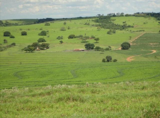 Fazenda 700 Alqueires - Região de Presidente Prudente-SP - Foto 6