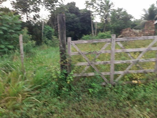 Vendo fazenda em Monte gordo - Foto 3