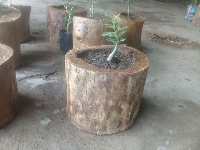 Adubo orgânico e jarros naturais. - Foto 3