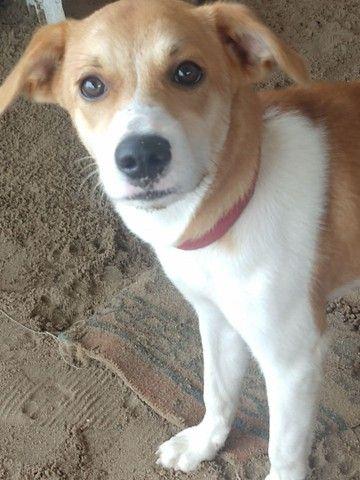 Doação Cachorros fêmeas, já vacinados polívalente e raiva