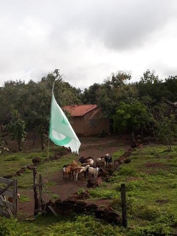 Fazenda 50alq Santa Maria PA 10mil o alq Tr x Casa em Palmas URG Airton - Foto 8