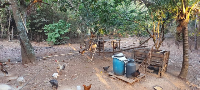 Chácara dentro de Goiânia de 33.696 m² - Foto 13