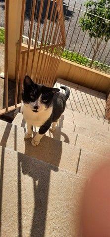 Doacao Gatinho super companheiro  - Foto 4