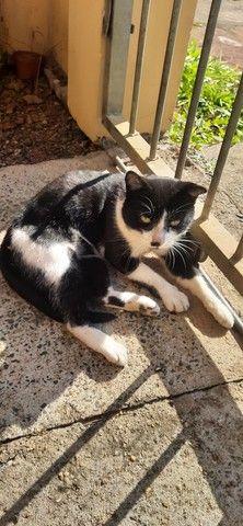 Doacao Gatinho super companheiro  - Foto 2