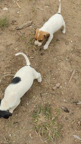 Cachorro caça 150 pra vender logo - Foto 5