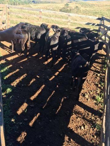Fazenda de 63.4 Alqueires. 40 Alq mec .20 Alq de Pasto .Nova Laranjeiras - PR - Foto 2