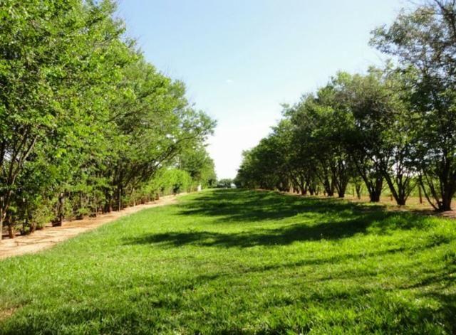 Fazenda 700 Alqueires - Região de Presidente Prudente-SP - Foto 4
