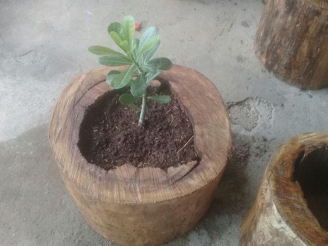 Adubo orgânico e jarros naturais. - Foto 5