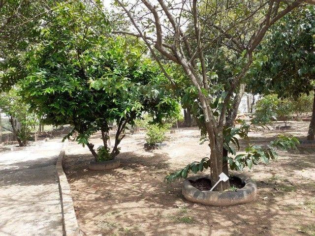 Rancho com pomar formado e linda vista para o rio. - Foto 20