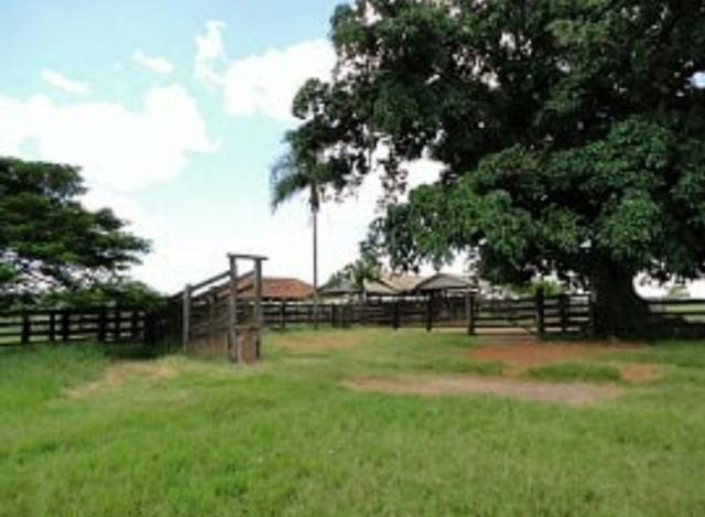 Fazenda 700 Alqueires - Região de Presidente Prudente-SP - Foto 8