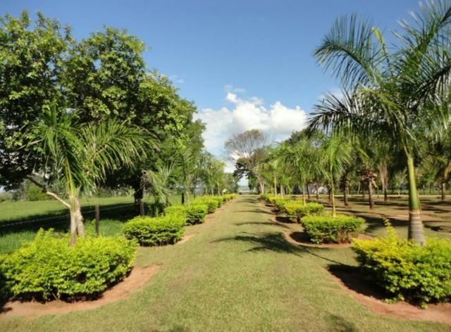 Fazenda 700 Alqueires - Região de Presidente Prudente-SP - Foto 17