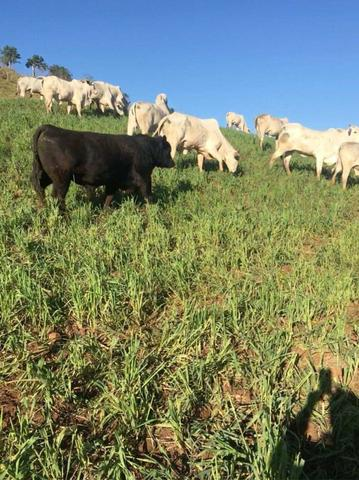 Fazenda de 63.4 Alqueires. 40 Alq mec .20 Alq de Pasto .Nova Laranjeiras - PR - Foto 8