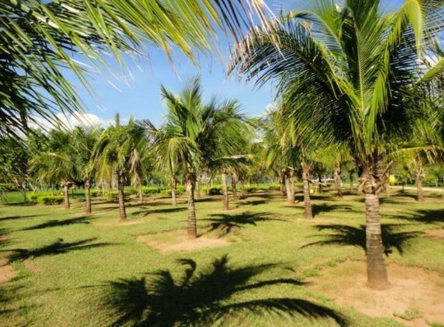 Fazenda 700 Alqueires - Região de Presidente Prudente-SP - Foto 15