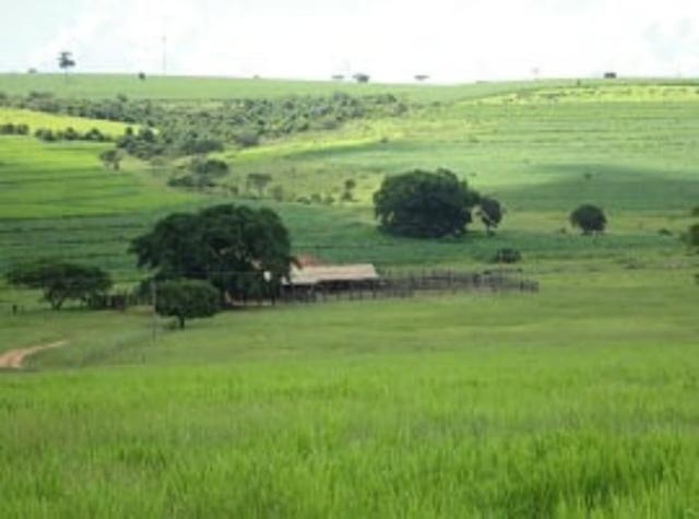 Fazenda 700 Alqueires - Região de Presidente Prudente-SP - Foto 11