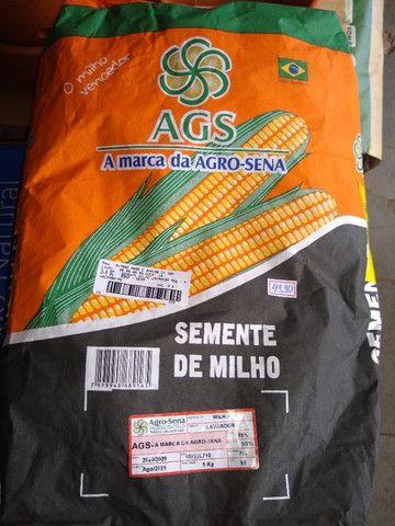 Vendo milho pra plantar 5kg