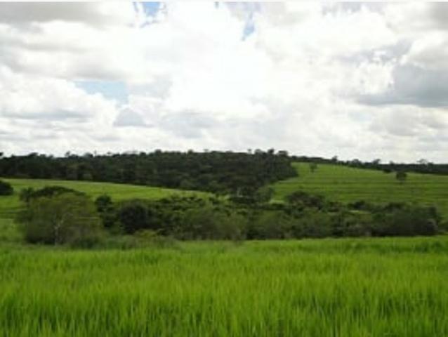 Fazenda 700 Alqueires - Região de Presidente Prudente-SP - Foto 7