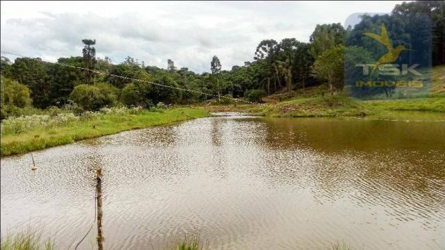 CH0266 - Chácara, 68.000 m² à venda por R$430.000. Agudos do Sul/PR. - Foto 5