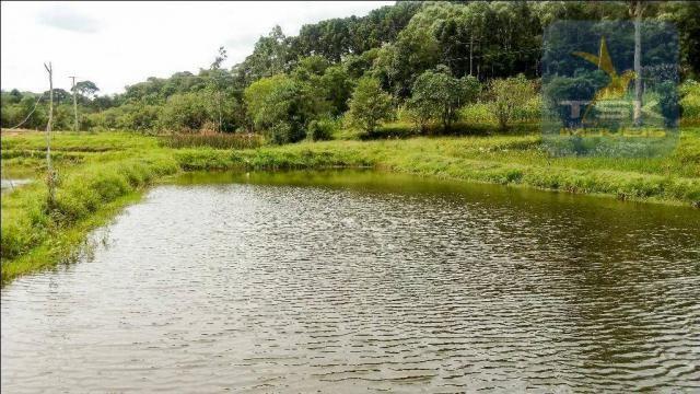 CH0266 - Chácara, 68.000 m² à venda por R$430.000. Agudos do Sul/PR. - Foto 6