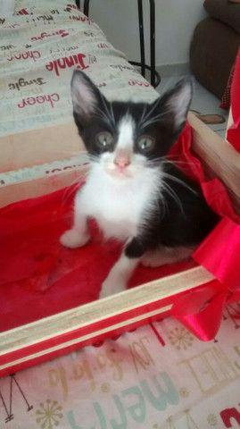 Doa-se gatinhos - Foto 2