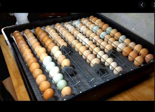 990,00 Chocadeira automática Dove 126 ovos