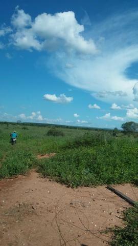 215A/Fazenda de 485 ha com outorga para irrigação às margens do Rio São Francisco - Foto 12