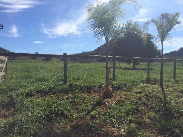 100 Alq. Planta 20 Vermelha Formada Montada Represa na Porta Iporá GO - Foto 18
