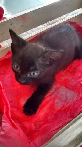 Doa-se gatinhos - Foto 4