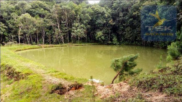 CH0266 - Chácara, 68.000 m² à venda por R$430.000. Agudos do Sul/PR. - Foto 4