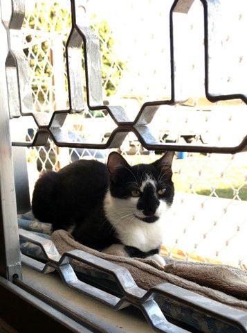 Gato Adoção Doação - Foto 5