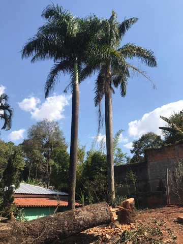 Palmeiras Imperial (Pampulha) - Foto 4