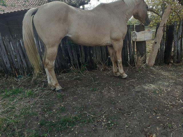 Zap *Cavalo grande e marcinho  para crianças  - Foto 2