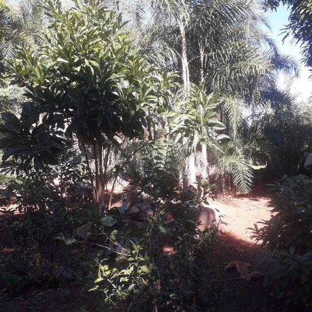 Sítio 118 hectares em coqueiral  - Foto 3