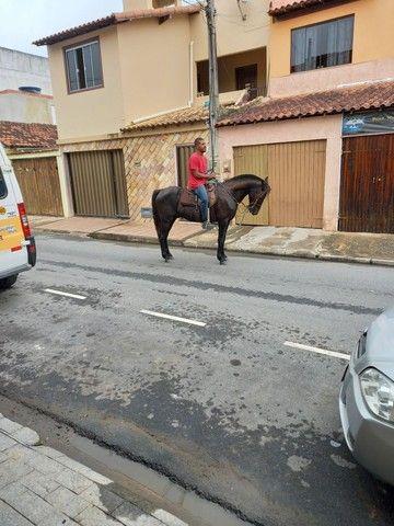 Cavalo  - Foto 4