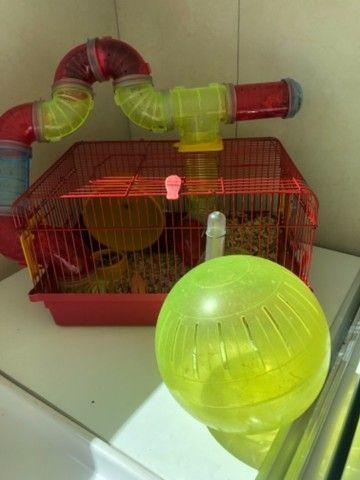Gaiola Para Hamster Com Tubos De Luxo  + bola de exercícios - Foto 5