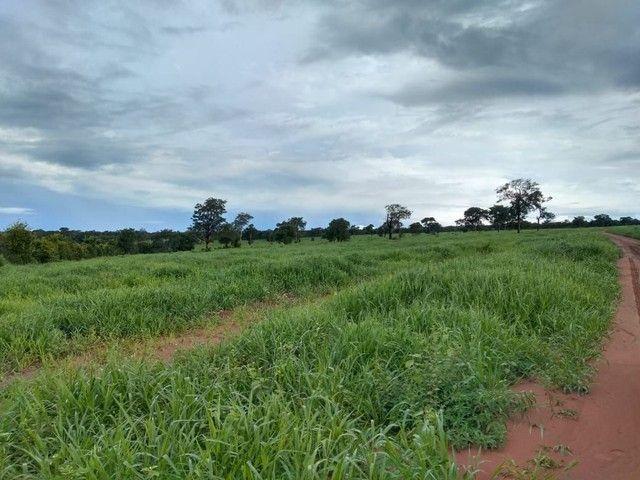 Fazenda a venda em Barra do Graça  - Foto 4