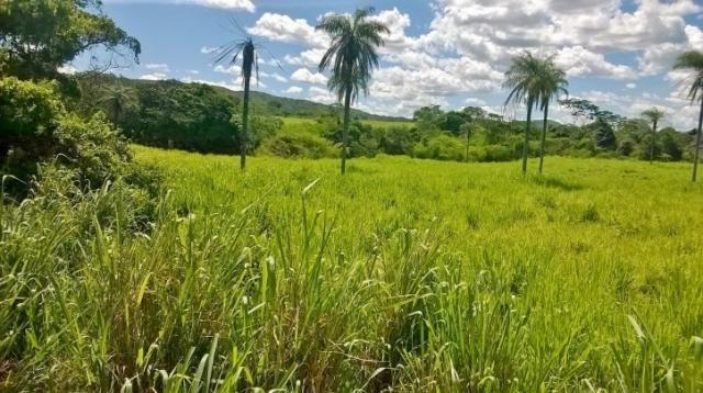 Fazenda em FORMOSA - GO, p/ Pecuária  - Foto 11