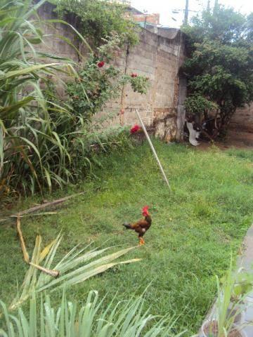 Loteamento/condomínio à venda em Caiçaras, Belo horizonte cod:1256 - Foto 2