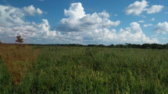 215A/Fazenda de 485 ha com outorga para irrigação às margens do Rio São Francisco - Foto 4