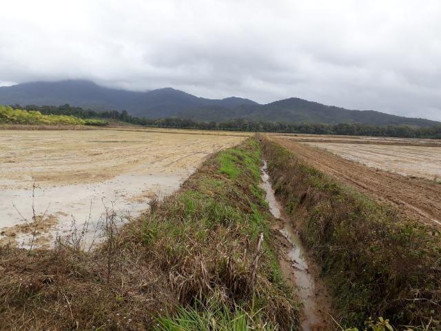 Fazenda Linda para Plantio de Arroz, Aceita parte Parcelado - Foto 17