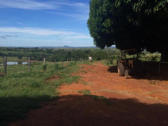 100 Alq. Planta 20 Vermelha Formada Montada Represa na Porta Iporá GO - Foto 2