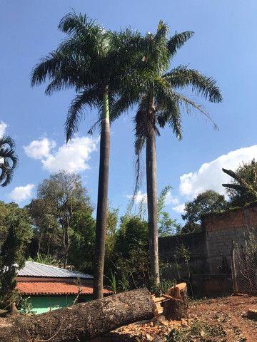 Palmeiras Imperial (Pampulha) - Foto 3