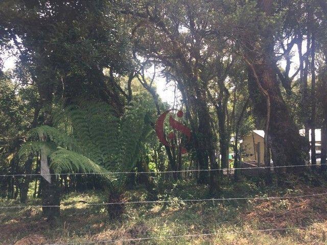 Terreno à venda no Jardim Mariana em Canela/RS - Foto 7
