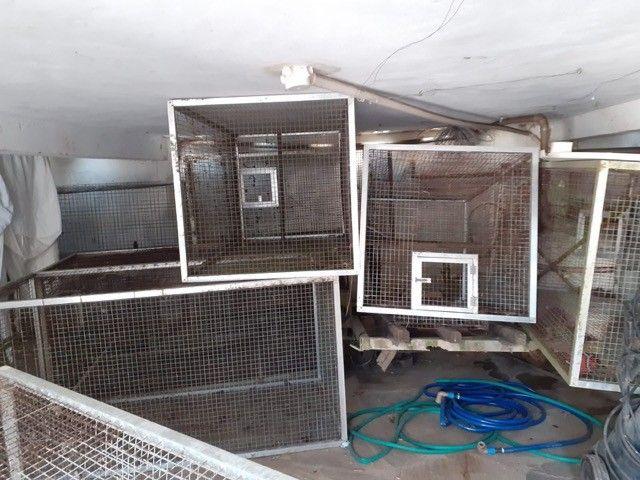 Gaiola/Viveiro galvanizada, acabamento alumínio, tenho várias
