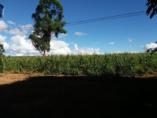 Ótima fazenda 42 Hectares dentro do DF, com água - Foto 6