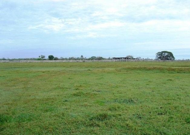 Fazenda em POCONÉ - MT, Pastagens p/ 30.000 cabeças - Foto 4
